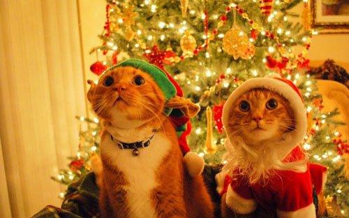Cute-Christmas-Animals-24-630x393