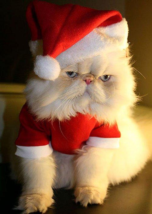 Cute-Christmas-Animals-38