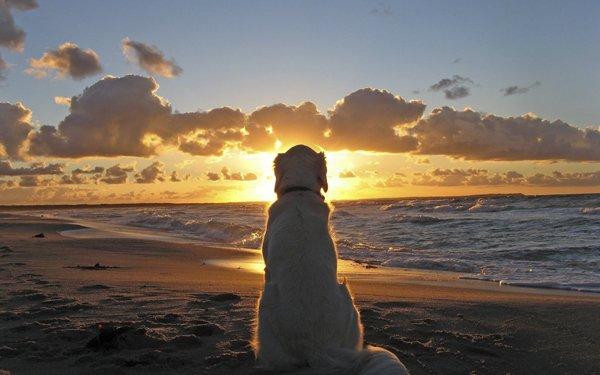 perrito-mirando-el-amanecer-en-la-playa-