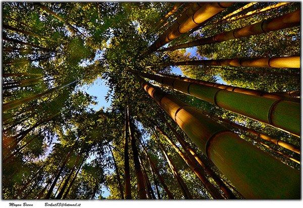 01-Forest-por-Moyan-Brenn