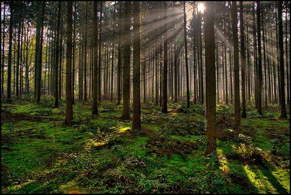 05-Magic-between-the-trees-por-Luc-B