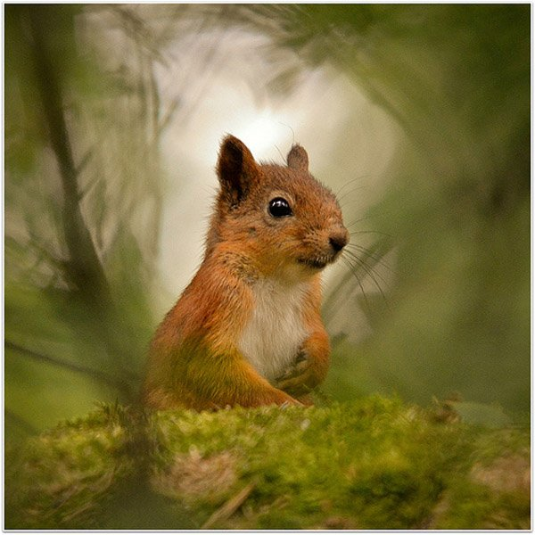 19-Greetings-From-Fairy-Tale-Forest-por-Jyrki-Salmi