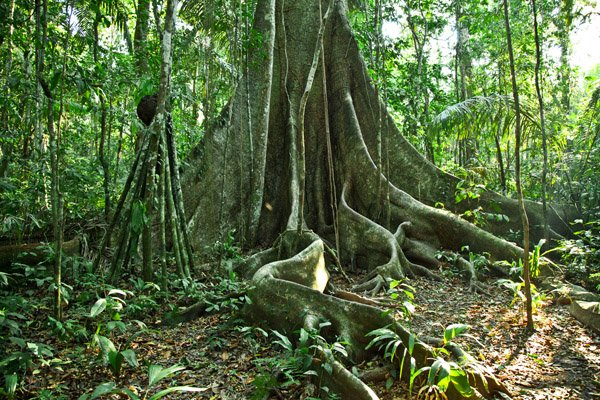 arbre_racine