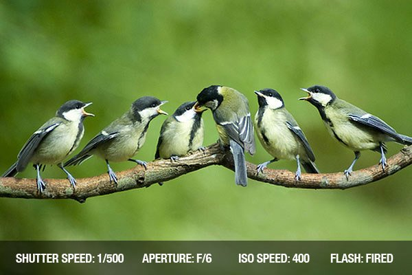 photographing-birds-4