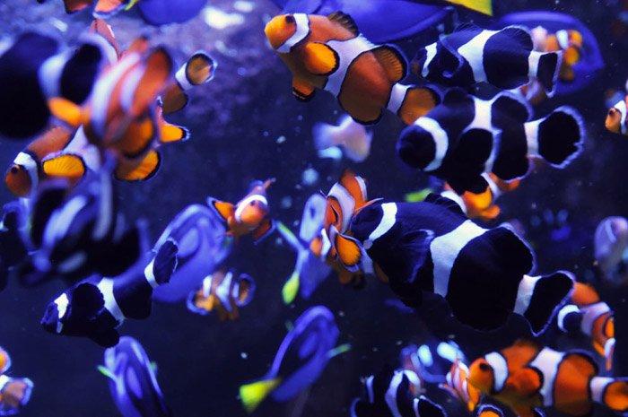 PVA-puzzle-fish-03