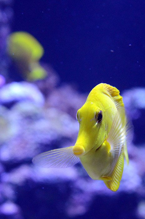 PVA-yellow-fish-02